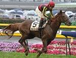 平成27年度の顕彰馬に選出されたオルフェーヴル